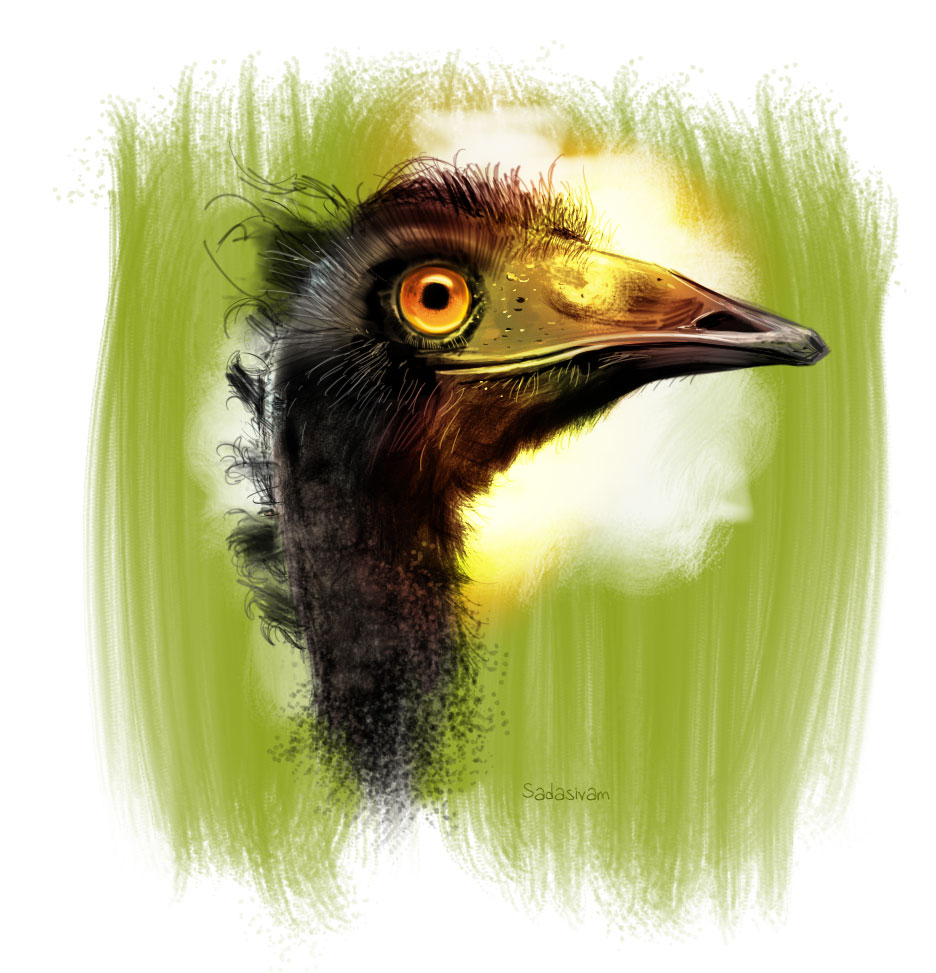 ostrich_painting